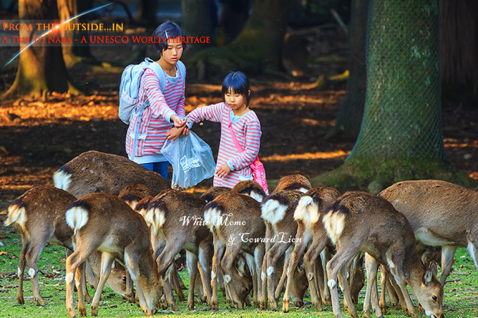 Nara, Japan - November 16 2013:Unidentified female children fe